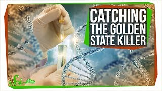 Download How DNA Analysis Led Police to the Golden State Killer Video