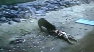 Download Puro Instinto... de rescatador! Perro rescata a niño del agua. Video
