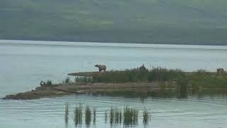 Download Bear Cam - Lower River Cam 07-20-2018 13:54:28 - 14:54:28 Video
