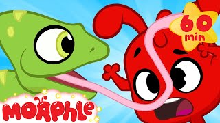 Download Funny Animals! Morphle meets a chameleon. Funny and cute animal cartoons for kids Video