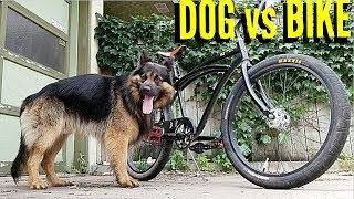 Download How To Ride Your Bike With A Dog Video