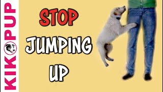 Download STOP jumping up! - Dog training by Kikopup Video