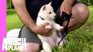 Download Eager Olaf Gets a Tad Off Track | Too Cute! Video