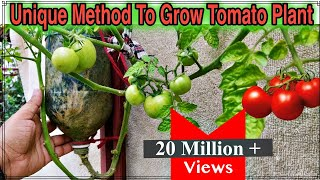 Download Best Method To Grow Tomato Plant in Plastic Hanging Bottle ll Vertical Gardening ll No Space Garden Video