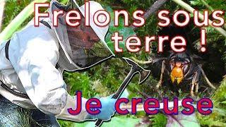 Download Frelons sous terre, danger mortel de piqûre ! Video