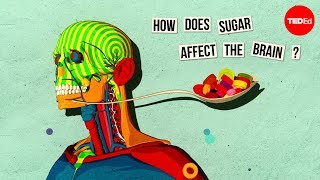 Download How sugar affects the brain - Nicole Avena Video