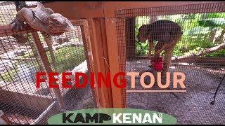 Download Reptile Feeding Tour at Kamp Kenan Video