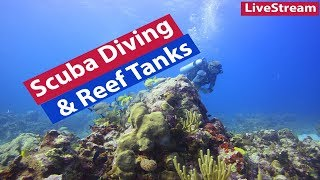 Download Scuba Diving and Reef Tanks - How has it changed the hobby for you? Video