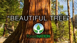 Download 4K Earth Day 2017 ″Beautiful Tree″ #PledgetoPlant Forest Nation Nature Relaxation Film Video
