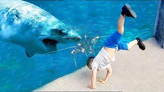 Download طفل القرش يذهب مطاردة طفل مضحك في أحواض السمك ★ جمع مضحك Video