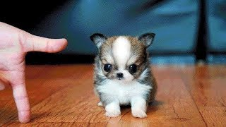 Download Cutest Dogs and Cat video compilation - Funny Cute Baby Videos Video