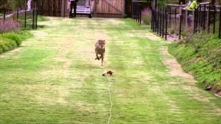 Download Cheetah Run - HD Video
