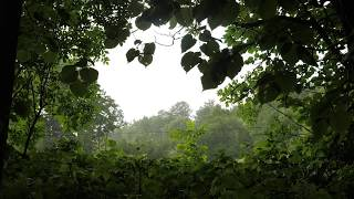 Download Rain Storm and Thunder 8 Hours / Rain Sounds for Relaxation Video