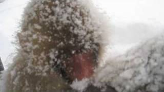 Download Snow Monkeys in blizzard, Yudanaka JAPAN Video