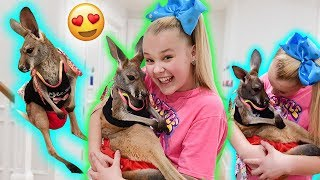 Download HANGIN OUT WITH A BABY KANGAROO!!! **cuteness overload!!** Video
