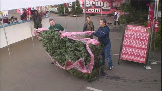 Download Kevin the Cashier at a Christmas Tree Lot Video