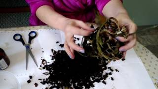 Download Попытка спасти орхидею.Trying to save the orchid. Video