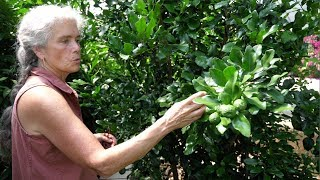 Download Growing Tropical Fruit in Canada Video