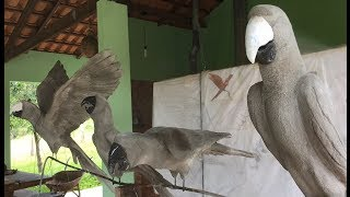 Download Escultura em concreto de arara - passo a passo (parte 1). Macaw Concrete statue - Step by Step Video