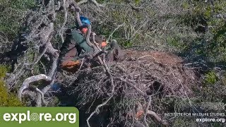 Download Eagle Rescue at Fraser Point! Video