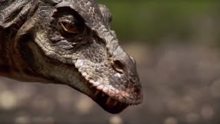 Download T-Rex : Attack of the Dinosaur | Walking with Dinosaurs in HQ | BBC Video