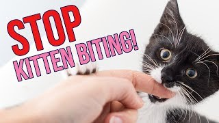 Download How to STOP Kittens From Biting You (6 Tips!) Video