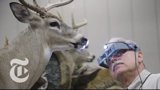 Download Taxidermy's Best in Show | The New York Times Video