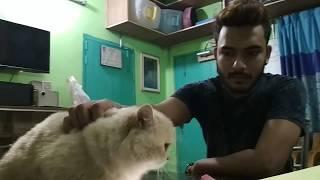 Download Persian cat @ Dr. Sagir's Pet Clinic 01912251312 Video