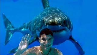 Download Smartest Shark Behavior Video