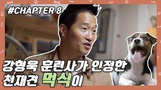 Download CHAPTER 8   망원동 사는 천재견 먹식이 ★날 교육 해줘요★ [개는 훌륭하다] #강형욱 #개통령 #강훈련사 Video