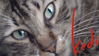 Download Kedi - Official U.S. Trailer - Oscilloscope Laboratories Video