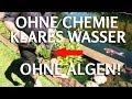 Download OHNE CHEMIE klares Teichwasser ohne Fadenalgen & Schwebealgen im Koiteich Video