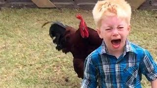 Download Funniest Animals Scaring People Reactions of 2019 Weekly Compilation 🐷🦆🐛 Funny Pet Videos Video