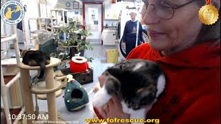 Download FFRC Double Adoption Timax and Trippadoo on 12/7/2019 Video