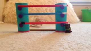 Download How To Train Your Rat To Jump Video