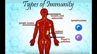 Download Types of immunity Video