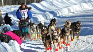 Download What is the Iditarod? | AK Explained Video
