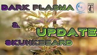 Download Ocean Grown Seeds Dark Plasma & SkunkBeard Update Video