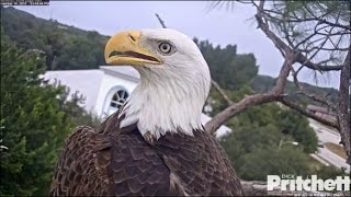 Download SWFL Eagles ~ M15's Brings Turtle to the Nest 11.14.16 Video