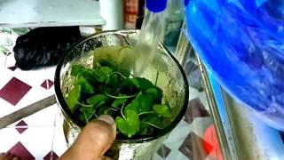 Download Cách xay rau má đơn giản mà ngon tuyệt   MDN 07 Video