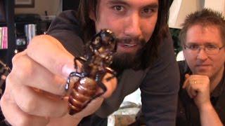 Download Cockroach Eating Contest!!! Waaaaaaaagh!!! Video