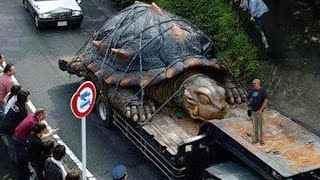 Download WORLD'S BIGGEST TORTOISE - real or fake? Video