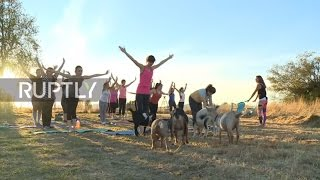 Download No Kidding! Yoga with goats takes off in Oregon Video