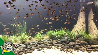 Download Lunch Time for the 800 GALLON AQUARIUM Video