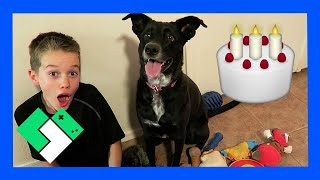 Download DOGGY BIRTHDAY PARTY (Day 1706) Video