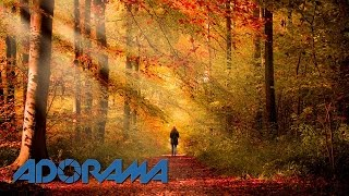 Download Autumn 15 Minute Photo Challenge: Take and Make Great Photography with Gavin Hoey Video