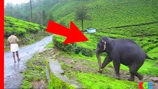 Download Pet Elephant meets her friend after a year ★ AMAZING Bond of Love Video