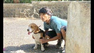 Download DOG SHORT FILM | SECRET POCKET || MOHAK MEET Video