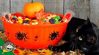 Download Grab Your Candy Bowl. It's Live Stream Time - Aquarium Co-Op Video