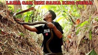Download KING COBRA BALI SEDIKIT LEBIH GALAK DARI YANG DI JAWA Video